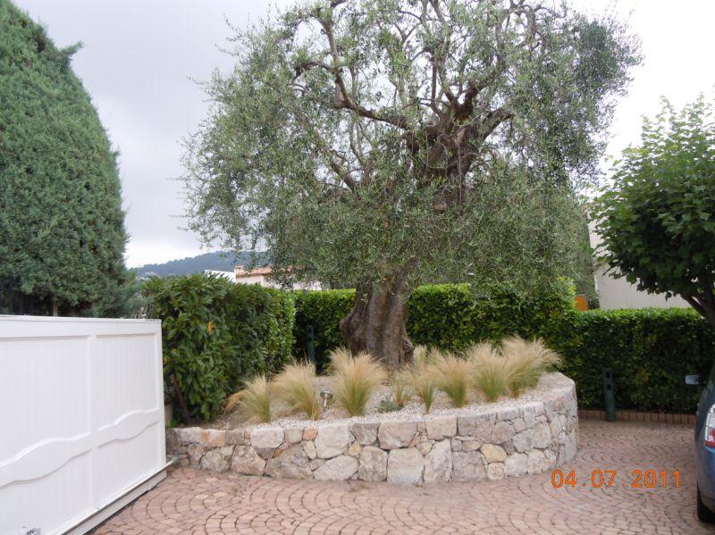 Idee Jardin Olivier Plantes Et Amenagement Jardin Mediterraneen U